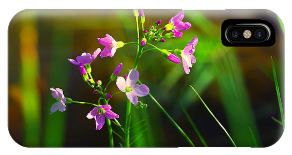 Wiese iPhone Case - Kuckucksblume by Tanja Riedel