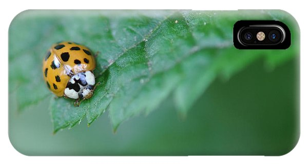 Ladybug Posing On Astilbe Leaf IPhone Case