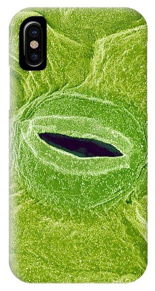 Leaf Pore, Sem Phone Case by Susumu Nishinaga