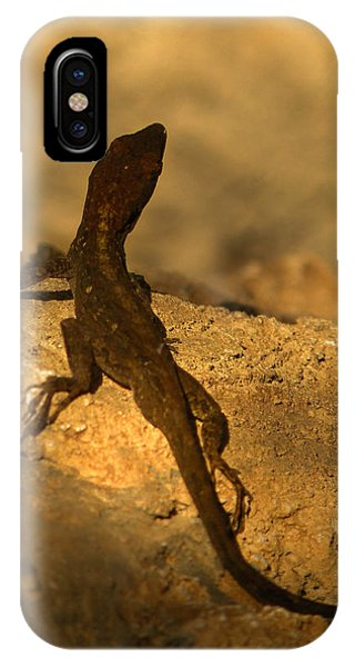 Newts iPhone Case - Leapin' Lizards by Trish Tritz
