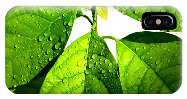 Leaves With Raindrops Phone Case by Theresa Willingham