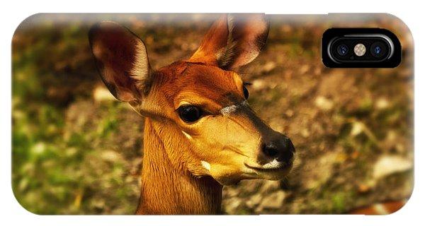 Lesser Kudu IPhone Case