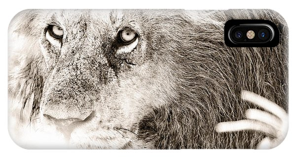 Lion In Concentration IPhone Case