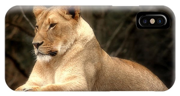 Lioness - Queen Of The Jungle IPhone Case