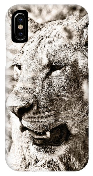 Lioness In Hiding IPhone Case