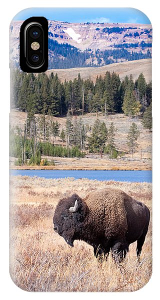 Lone Buffalo IPhone Case
