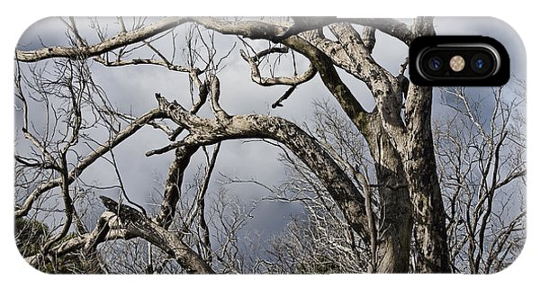 Wilsons Promontory iPhone Case - Lone Tree by Douglas Barnard