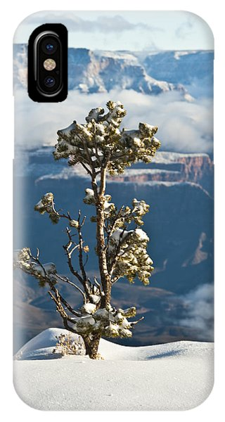 Lonely Tree Over The Grand Canyon IPhone Case