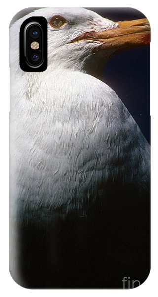 Long Island Seagull IPhone Case