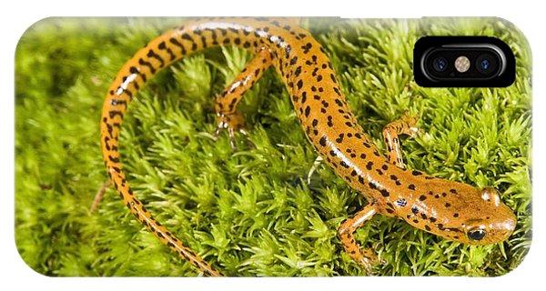 Longtail Salamander Eurycea Longicauda IPhone Case