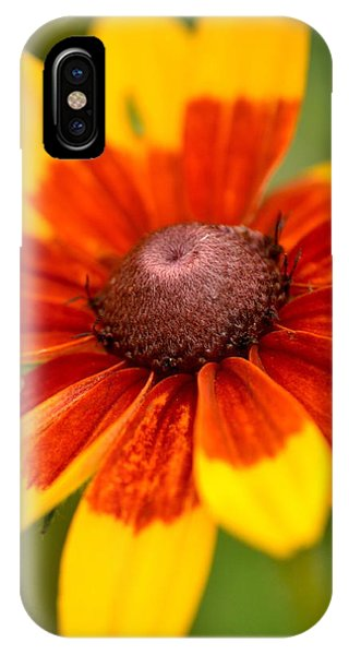 Looking Susan In The Eye IPhone Case