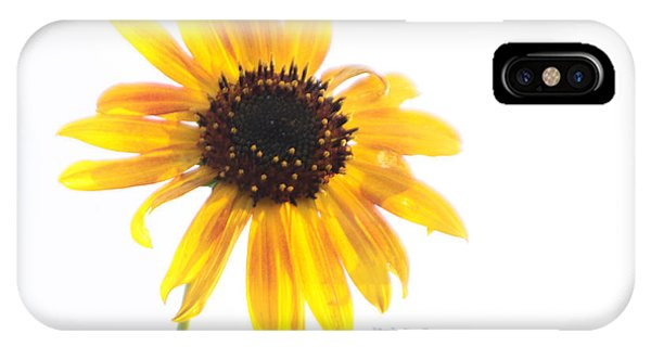 Lost In The Sun IPhone Case
