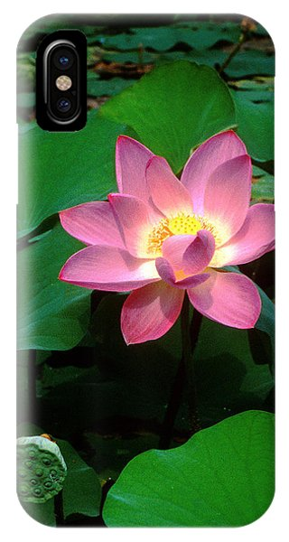 Lotus Flower And Capsule 24a IPhone Case