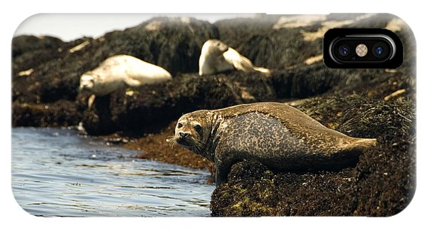 Lounging Seals IPhone Case