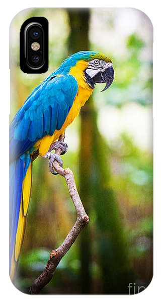 Macaw iPhone Case - Macaw by Joan McCool