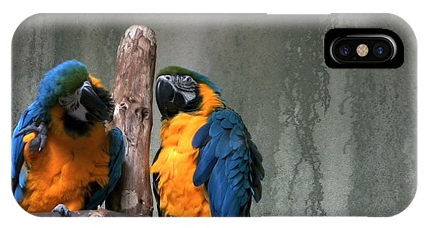 Maccaw Parrots Phone Case by Kim French