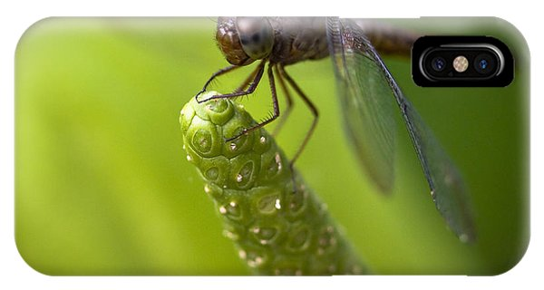 Macro Of A Dragonfly - Focus Stacked Image IPhone Case