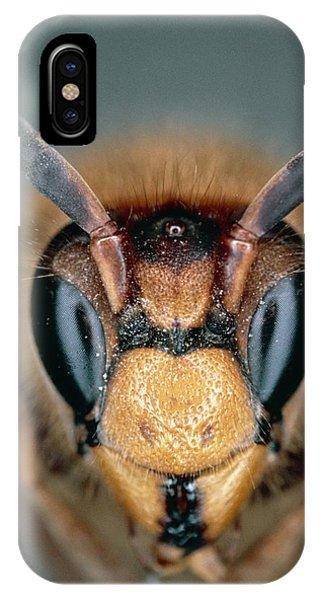 Macrophoto Of Head Of Hornet Vespa Crabro IPhone Case