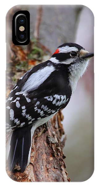 Male Downy Woodpecker IPhone Case