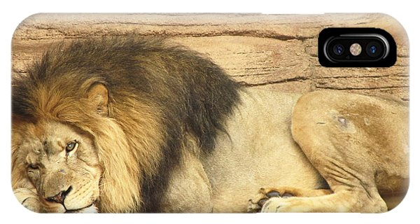 Male Lion Resting IPhone Case