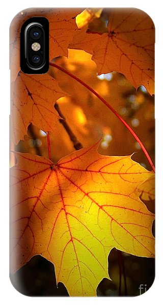 Maple At First Light IPhone Case