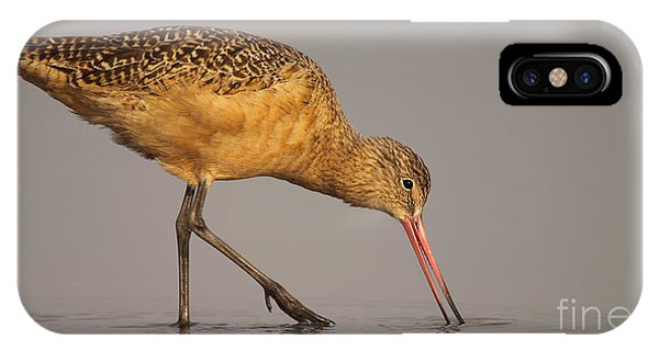 Marble Godwit Feeding Phone Case by Max Allen