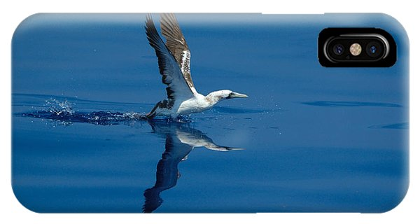 Masked Booby IPhone Case