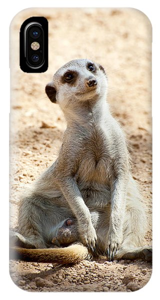 Meerkat iPhone Case - Meerkat by Fabrizio Troiani