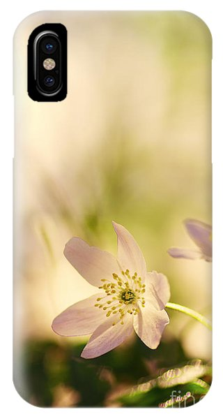 Wiese iPhone Case - Melody Of Spring by Tanja Riedel