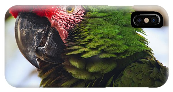 Macaw iPhone Case - Military Macaw Parrot by Adam Romanowicz