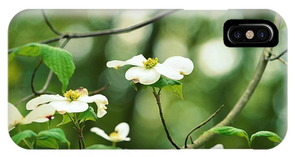 Miracle Of The Dogwood IPhone Case