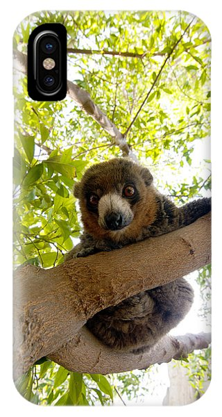 Mongoose Lemur IPhone Case