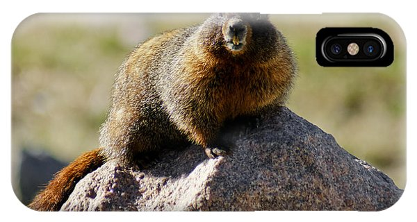 Morning Marmot IPhone Case