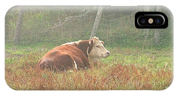 Morning Moo IPhone Case