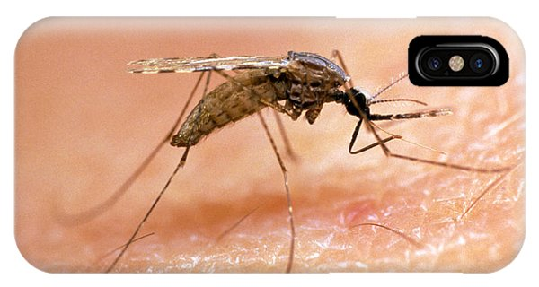 Mosquito On Human Skin, Ready To Bite Phone Case by Dr. Pete Billingsley, University Of Aberdeensinclair Stammers