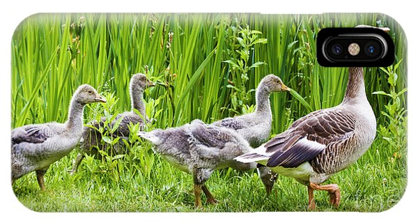 Mother Goose Leading Goslings IPhone Case