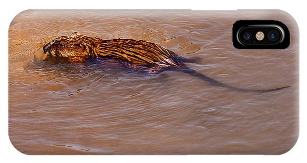 Muskrat Swiming IPhone Case