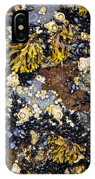 Sea Floor iPhone Case - Mussels And Barnacles At Low Tide by Elena Elisseeva