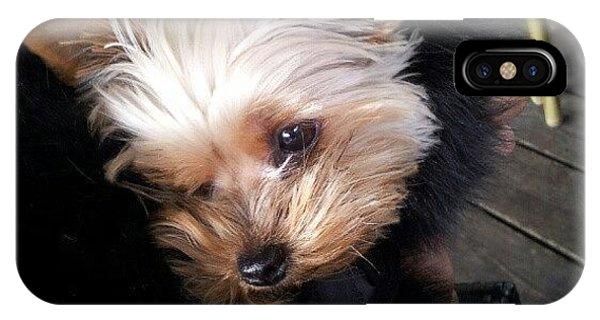 Instago iPhone Case - My #princess #dog #yorkie by Torbjorn Schei