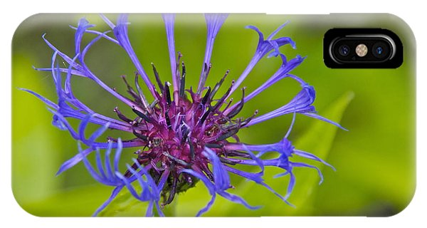 Mystery Wildflower 3 IPhone Case