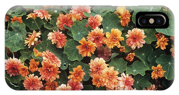 Nasturtium (tropaeolum 'margaret Long') Phone Case by Adrian Thomas