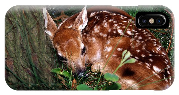 White Tailed Deer iPhone Case - Nature's Precious Creation by Skip Willits