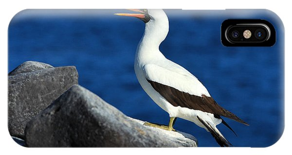 Boobies iPhone Case - Nazca Booby by Tony Beck