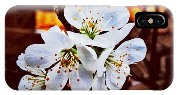 Fineart iPhone Case - New Blossoms by Paul Cutright