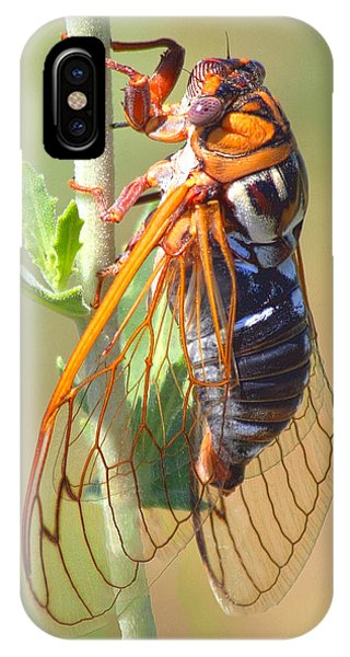 Noisy Cicada IPhone Case