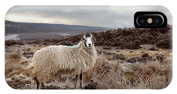Moor iPhone Case - North York Moors Sheep by Martin Williams