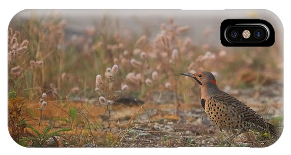 Northern Flicker iPhone Case - Northern Flicker  by Susan Capuano