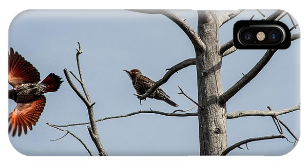 Northern Flicker iPhone Case - Northern Flickers by Mitch Shindelbower