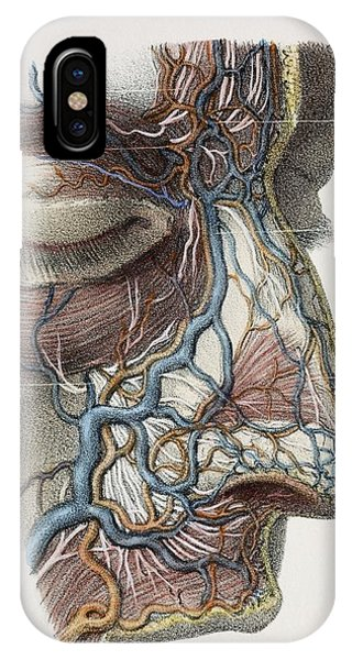 Nose Nerves And Vessels, 1844 Artwork Phone Case by