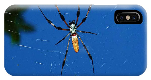 Not-so Itsy-bitsy Spider IPhone Case